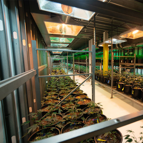 Commercial Grow Room Installation