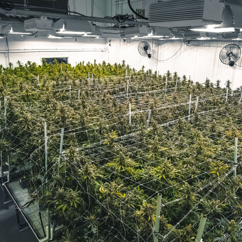 Commercial Grow Rooms