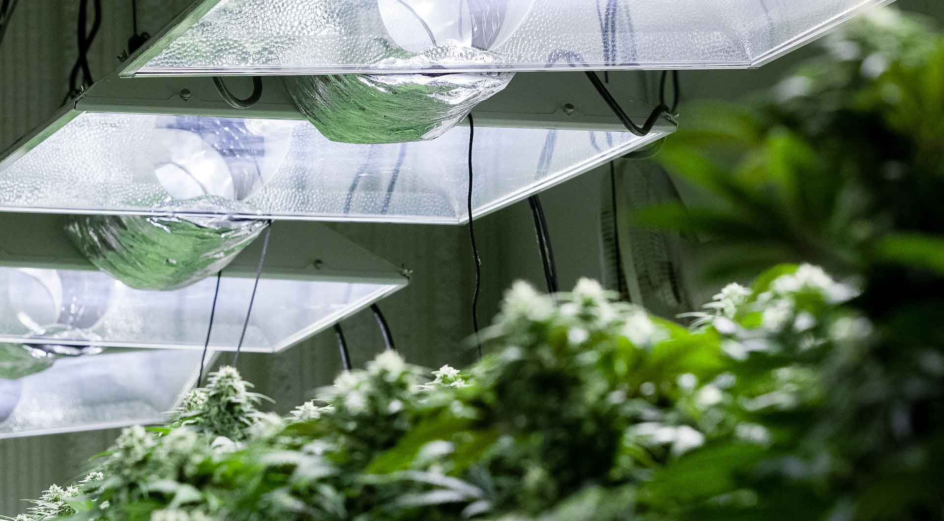Warehouse Grow Rooms
